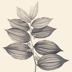The leaf 2 art print by Gallerist