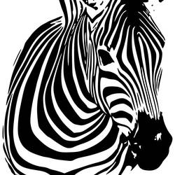 The black and white zebra art print by Gallerist