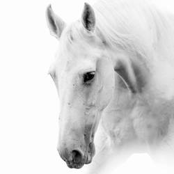 White Horse 2 art print by Gallerist