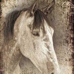 Brown Horse art print by Gallerist