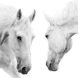Two horse art print by Gallerist
