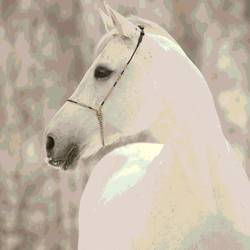 White Horse 3 art print by Gallerist