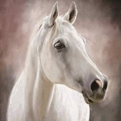 White Horse 4 art print by Gallerist