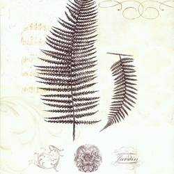 Fern art print by Gallerist