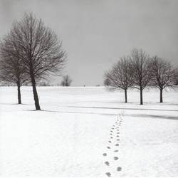 Snow Walk art print by Gallerist