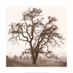 Tree art print by Gallerist