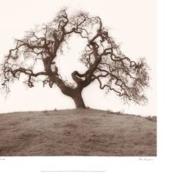 Summer Tree art print by Gallerist