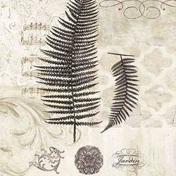 Ferns art print by Gallerist