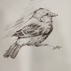 bird sketch, 12 x 18 inch, ronak dodia,drawings,fine art drawings,realism drawings,paintings for dining room,paintings for living room,paintings for bedroom,paintings for kids room,paintings for hotel,thick paper,charcoal,12x18inch,GAL0486611690