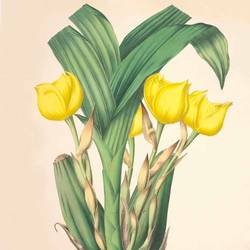 round yellow flower with curve leaf art print by Gallerist