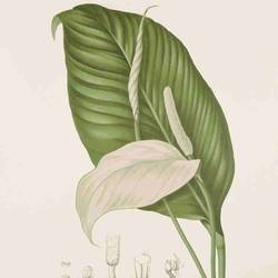 Long leaf with samll leaf art print by Gallerist