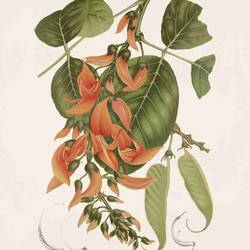 Corve orange flower art print by Gallerist