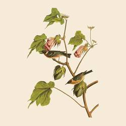 Bird on flower  art print by Gallerist