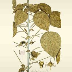 Brown leaf  art print by Gallerist