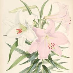 pink and white flower art print by Gallerist
