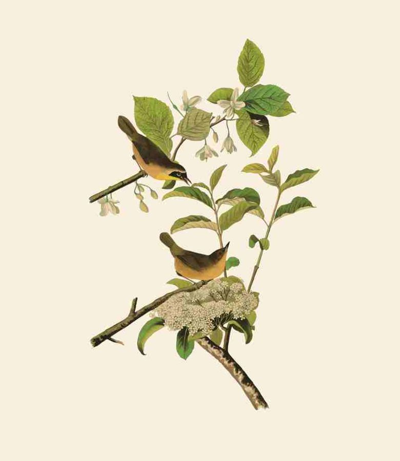 Small white flower with brown bird