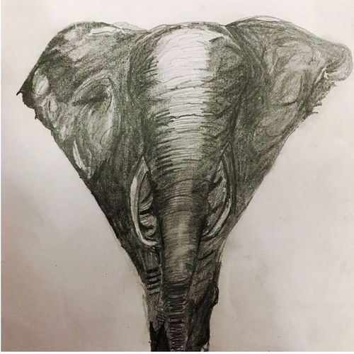 the elephant, 8 x 12 inch, sharad khandelwal,figurative drawings,paintings for dining room,paintings for living room,paintings for bedroom,paintings for office,paintings for kids room,paintings for kitchen,paper,charcoal,8x12inch,GAL0492311924