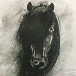 horse, 7 x 9 inch, vaidehi akulwar,paintings for dining room,paintings for living room,paintings for bedroom,paintings for office,paintings for hotel,paintings for kitchen,horse paintings,paper,charcoal,7x9inch,GAL0507412112