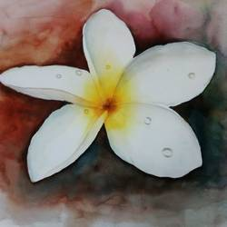 plumeria flower, 19 x 14 inch, vivek anand,paintings,flower paintings,fabriano sheet,watercolor,19x14inch,GAL0366012197