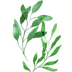 Long green leaf 1 art print by Gallerist