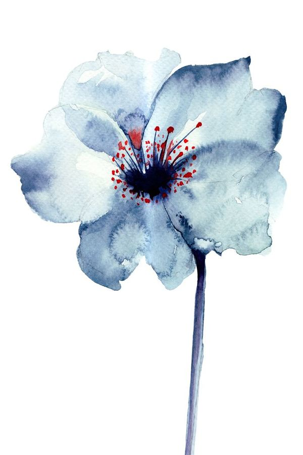 Blue flower with white shade