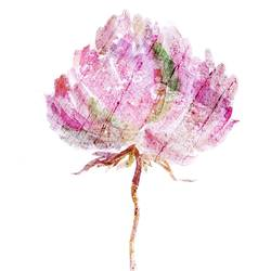 Pink flower  art print by Gallerist