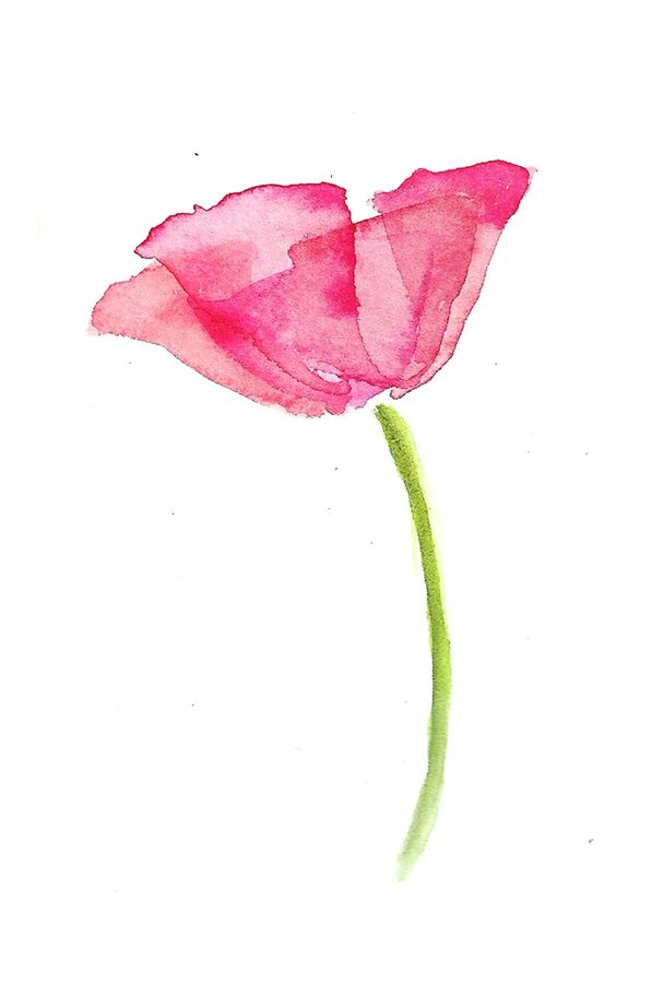 Pink flower with green stemp