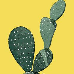 Cactus  art print by Gallerist