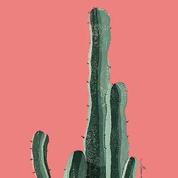 The long cactus  art print by Gallerist