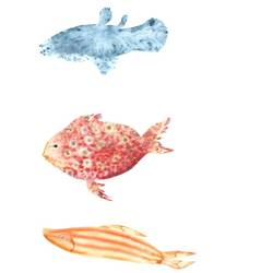 Defferent colour fish  art print by Gallerist