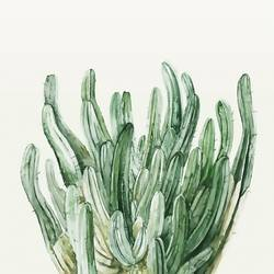 Many cactus  art print by Gallerist