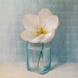 White flower in glass  art print by Gallerist