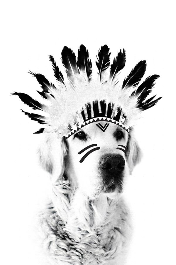 Dog with feather
