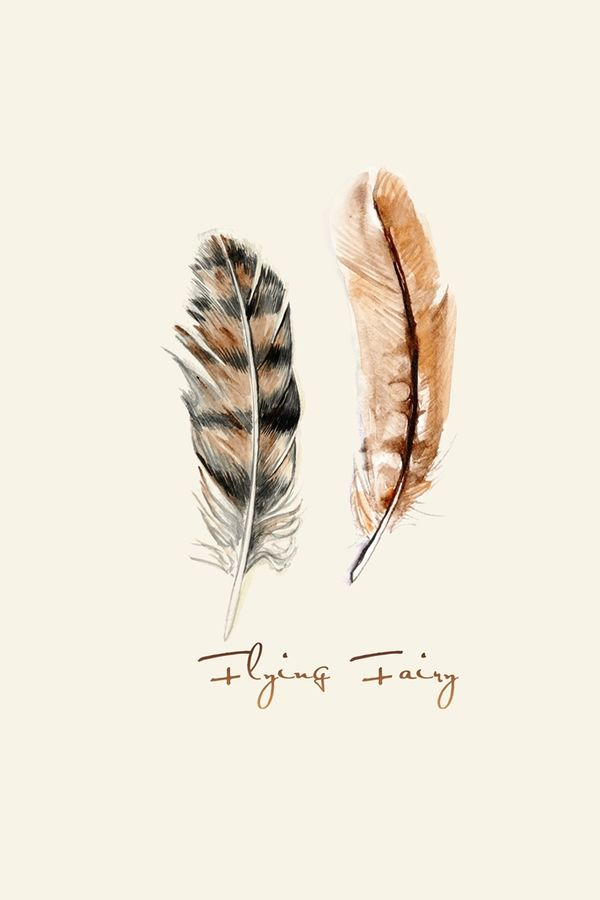 Two feather of bird
