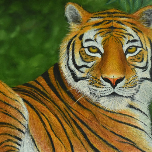 mesmerizing tiger, 28 x 17 inch, goutami mishra,wildlife paintings,paintings for living room,canvas,oil,28x17inch,GAL04651269