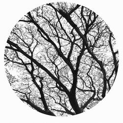 Round tree  art print by Gallerist