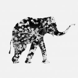 Elephant with flower  art print by Gallerist