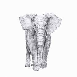 Elephant with big nose  art print by Gallerist