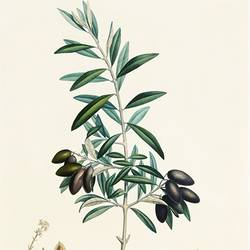 Small plant with long leaf  art print by Gallerist