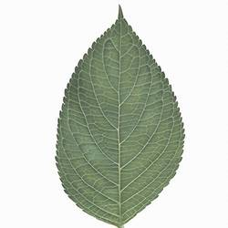The leaf  art print by Gallerist