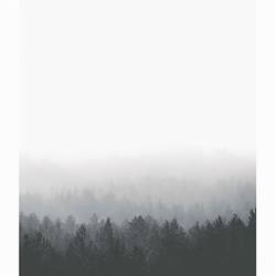 The forest  art print by Gallerist