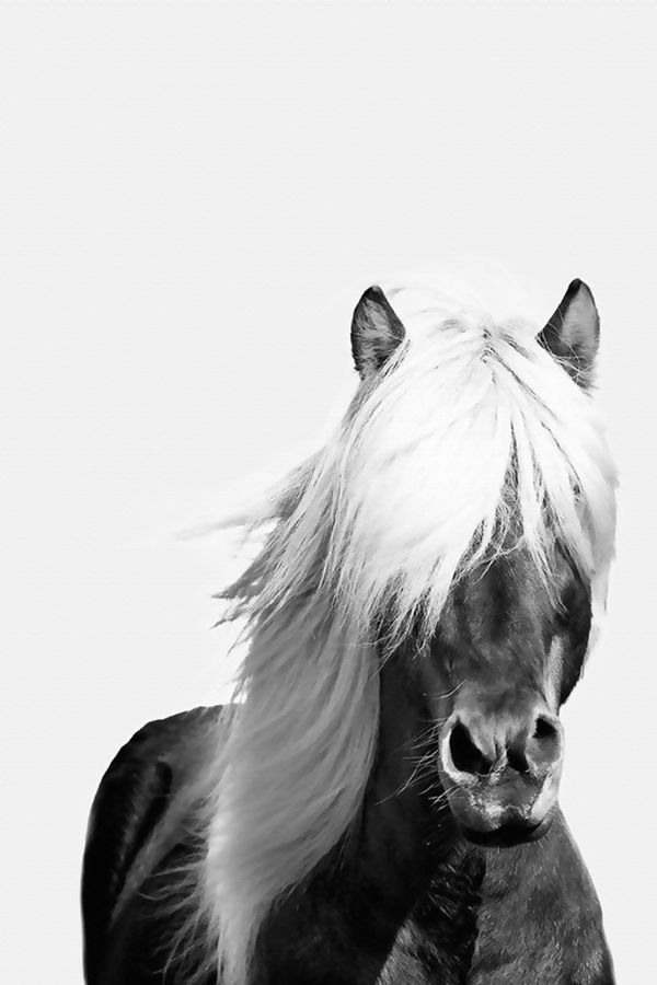 Horse with white hair