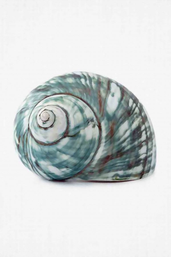 Shell with green shade