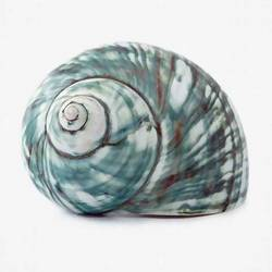 Shell with green shade   art print by Gallerist