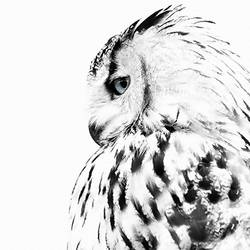 Owl bird  art print by Gallerist