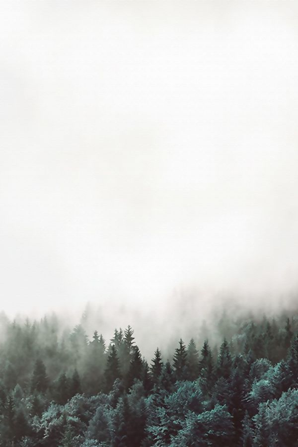 Tree cover with fog