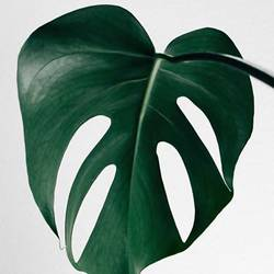 Big green leaf  art print by Gallerist