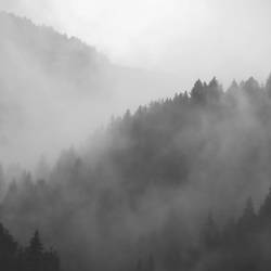 Fog mountain with tree art print by Gallerist