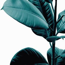 Dark green leaf  art print by Gallerist