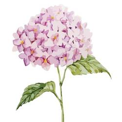 Pink hydrangea art print by Gallerist